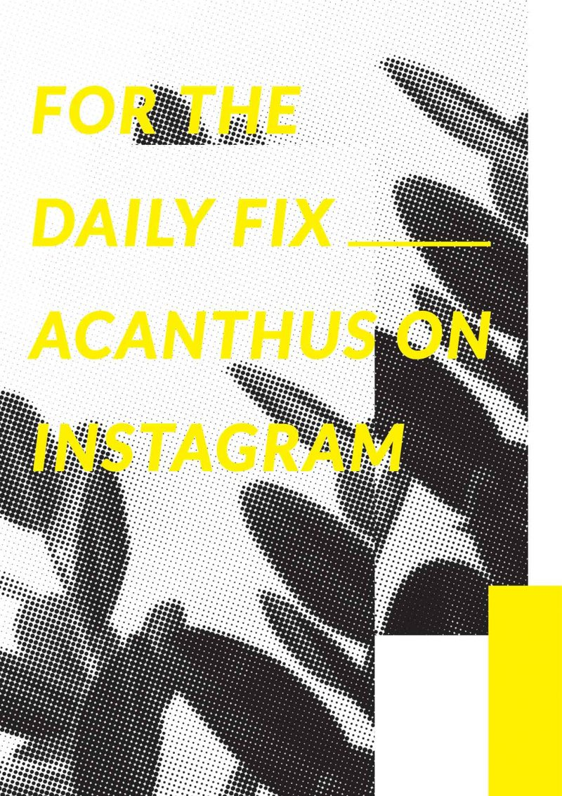 acanthus_daily_fix_yellow